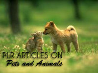 give you 950 High Quality PLR Articles on Pets & Animals